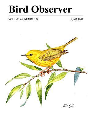 essay on birds